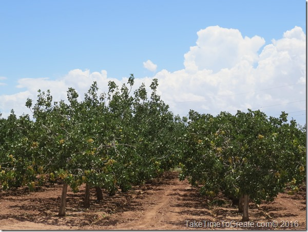 Travel Journal- Heart of the Desert Pistachio Farm in Alamogordo, NM